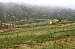 Cetto Vineyards, Valle de Guadalupe, April 2011